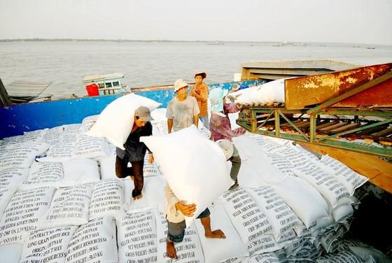 Lúa chín đầy đồng giữa giãn cách xã hội, 5 triệu tấn lúa ở miền Tây đang chờ bán ảnh 1