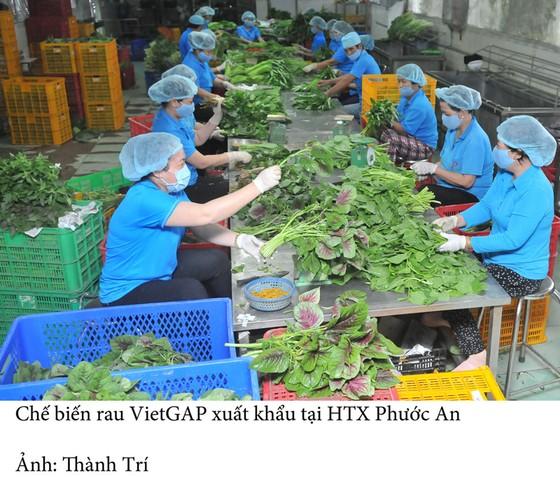 Tín hiệu tích cực từ nông sản xuất khẩu ảnh 1
