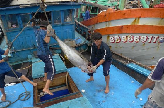 Bài 2: Chinh phục biển bằng công nghệ mới ảnh 1
