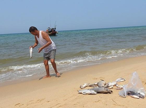 Thêm thời gian hỗ trợ khắc phục sự cố môi trường biển ảnh 1
