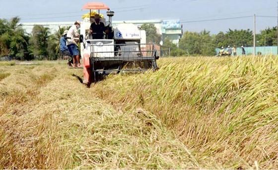 Xuất khẩu gạo và cao su tăng mạnh ảnh 1