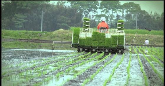 Nhật Bản đầu tư trồng lúa ở châu Á ảnh 1