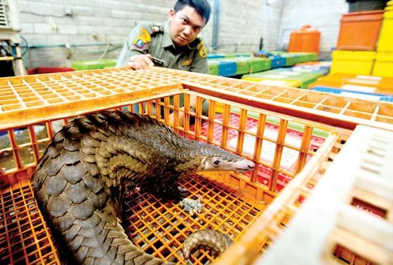 Chống buôn bán động vật hoang dã bằng công nghệ ảnh 1