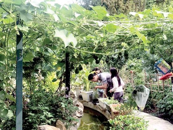 Vui như người Việt làm vườn ảnh 1