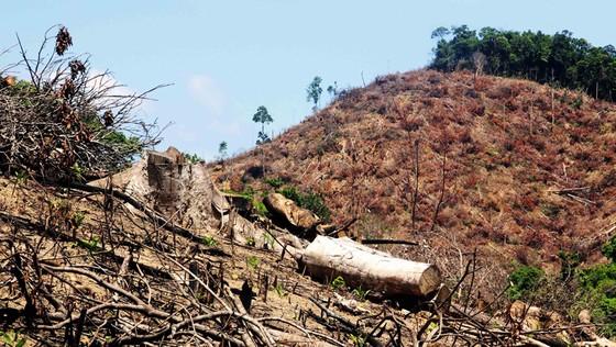 """Rừng liên tục """"biến mất"""" tại Bình Định: Chưa nghiêm thực hiện việc đóng cửa rừng! ảnh 1"""