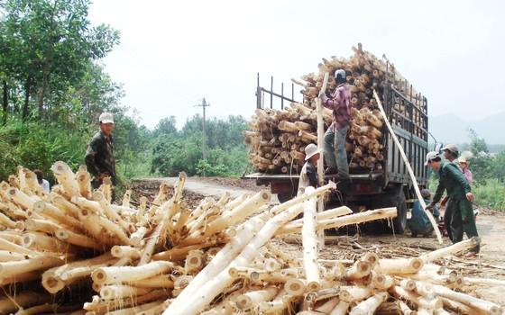 Miền Trung: Rừng mất, đất cằn - Bài 1: Muôn kiểu phá rừng ảnh 1
