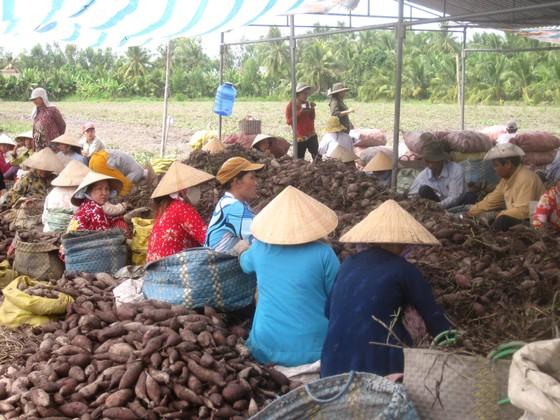 Sản xuất, tiêu thụ nông sản: Vẫn loay hoay bài toán thị trường ảnh 1