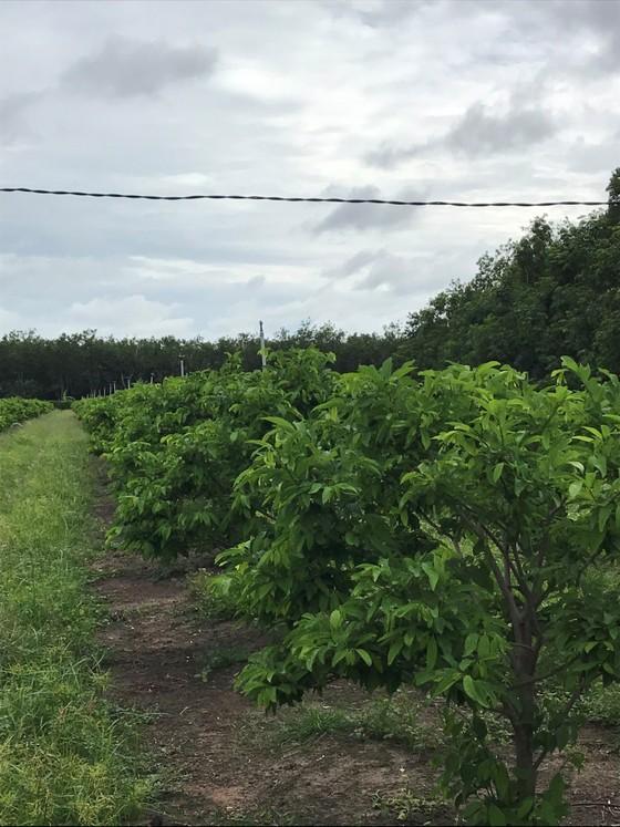 Tây Ninh phát triển nông nghiệp công nghệ cao hướng tới xuất khẩu ảnh 2