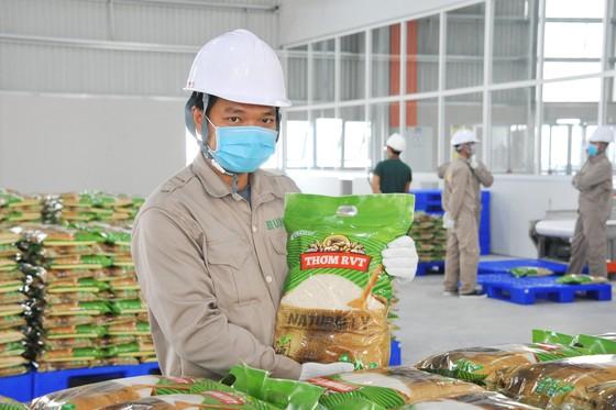 Tìm đường tiêu thụ hàng triệu tấn lúa ở ĐBSCL ảnh 1