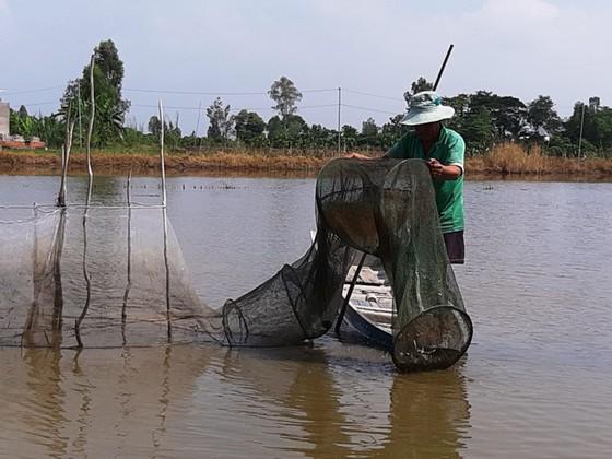 ĐBSCL: Nước lũ về nhưng thủy sản còn ít  ảnh 1