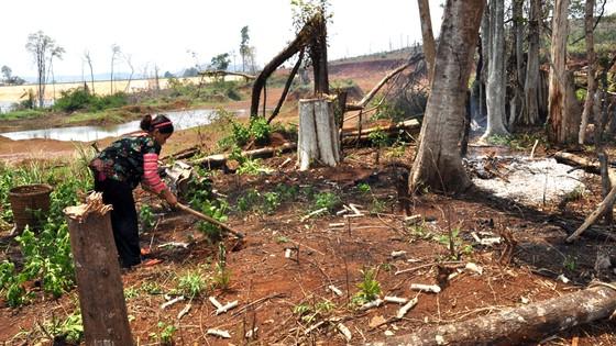 Bài 4: Phải giao rừng cho ai? ảnh 2