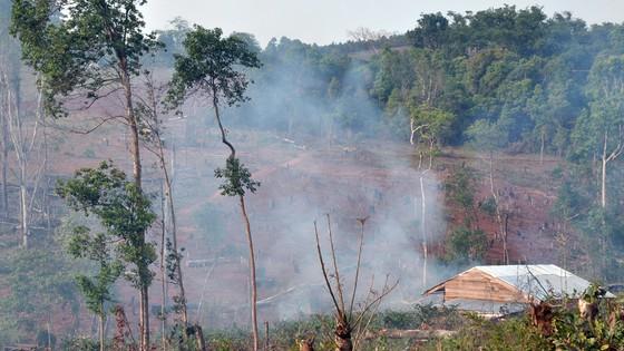 Bài 4: Phải giao rừng cho ai? ảnh 1