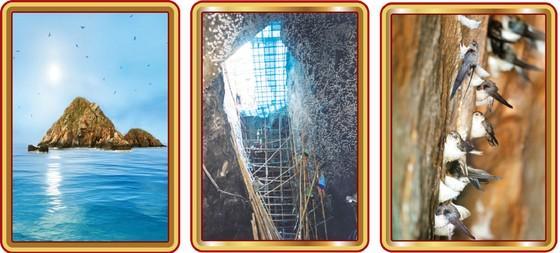 Yến sào Khánh Hòa - Yến đảo thiên nhiên ảnh 1