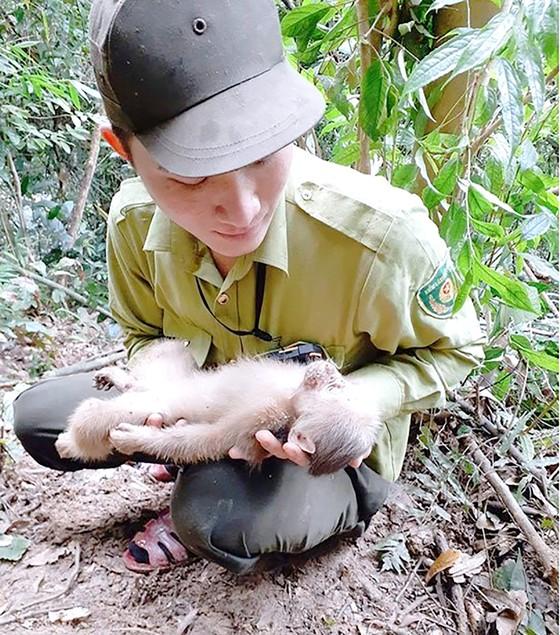 'Biệt đội' giải cứu thú rừng ảnh 1