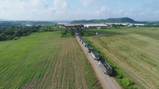 Vững đà tăng trưởng, TH true MILK đón đàn bò sữa cao sản nhập khẩu đầu tiên trong năm 2021 ảnh 3