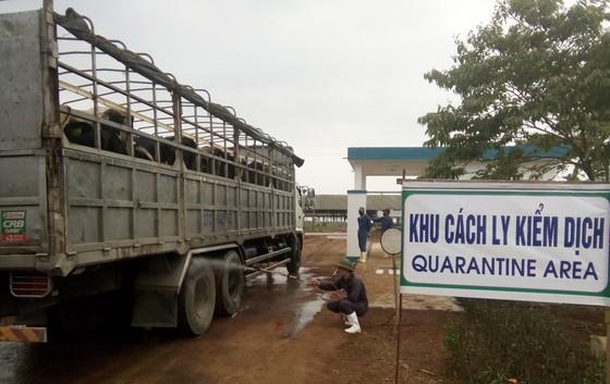 Vững đà tăng trưởng, TH true MILK đón đàn bò sữa cao sản nhập khẩu đầu tiên trong năm 2021 ảnh 4
