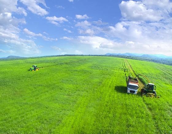 Vững đà tăng trưởng, TH true MILK đón đàn bò sữa cao sản nhập khẩu đầu tiên trong năm 2021 ảnh 5