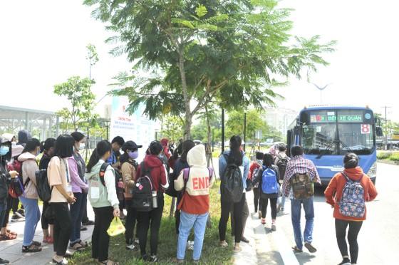 Hoạt động xe buýt ngày càng 'èo uột' ảnh 2