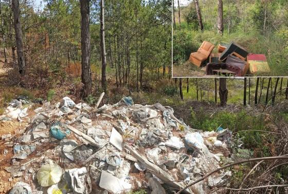 Đổ rác vào rừng ảnh 1
