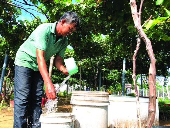 Khởi nghiệp trồng nho ở xứ Dừa ảnh 3