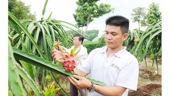Cơ hội tăng xuất khẩu nông sản ảnh 1