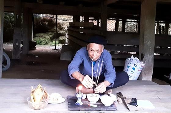 Bảo tồn cây chè cổ thụ tại vùng trà Cao Bồ, tỉnh Hà Giang ảnh 3