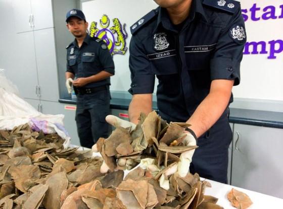 Ngà voi và vảy tê tê gần 1 triệu USD trong kho hàng sân bay Malaysia ảnh 1