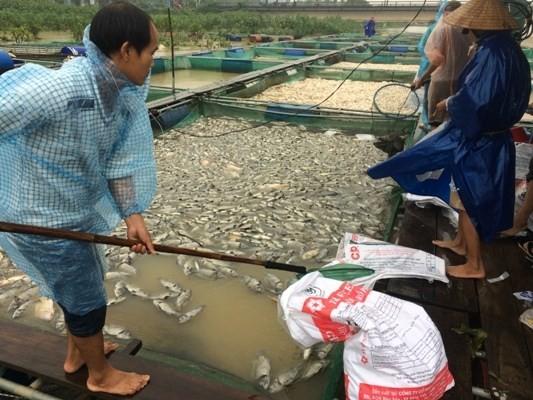 Người dân khó ròng vớt cá chết vì lũ sông Bồ