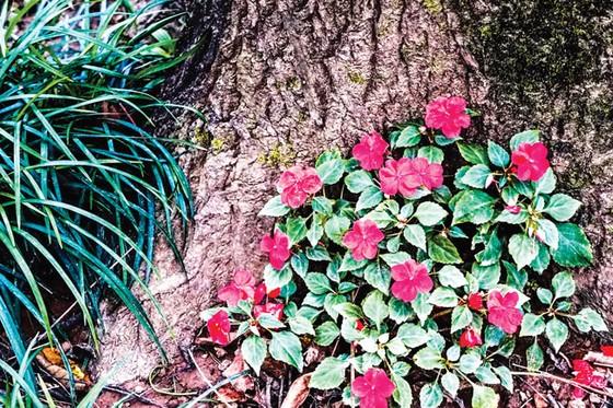 Ba Vì trong muôn sắc hoa ảnh 1