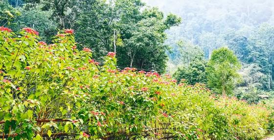 Ba Vì trong muôn sắc hoa ảnh 7