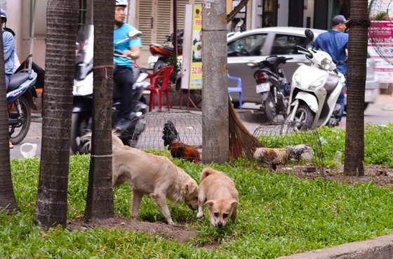 Khủng hoảng với băng nhóm chó mèo ở chung cư - Ảnh 1.