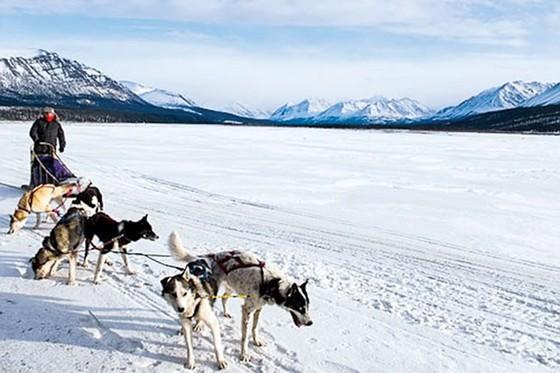 Alaska kho báu nước Mỹ ảnh 9
