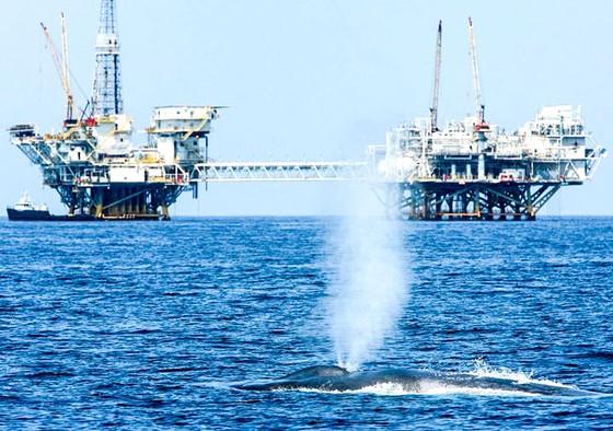Cân nhắc khai thác tài nguyên đại dương ảnh 1