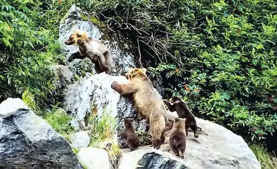 Hành trình khám phá Alaska ảnh 7