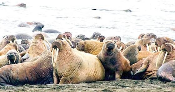 Hành trình khám phá Alaska ảnh 6