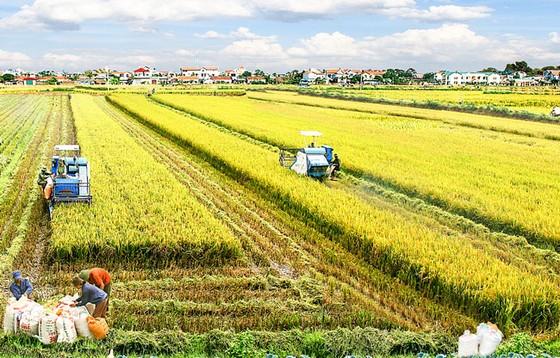 Nghèo nàn sản phẩm dịch vụ nông nghiệp nông thôn ảnh 1