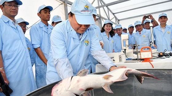Thủ tướng Nguyễn Xuân Phúc thăm khu sản xuất cá tra giống công nghệ cao của Công ty cổ phần Việt Úc. Ảnh: VGP