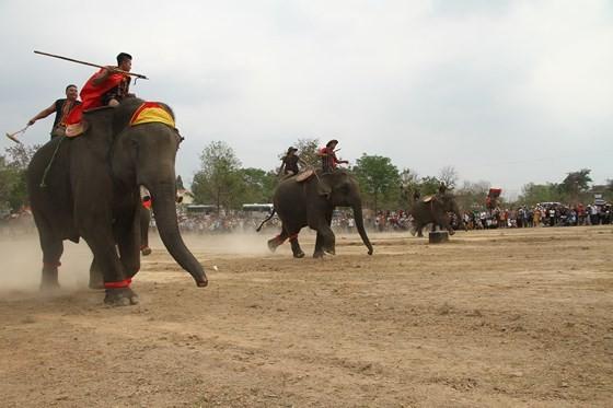 Đến xứ voi xem voi đá bóng ảnh 2