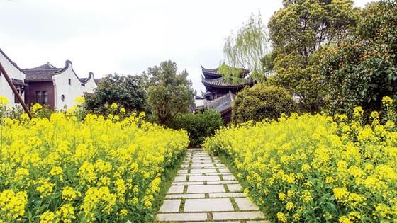 Thủy trấn thơ mộng ở Chiết Giang ảnh 2