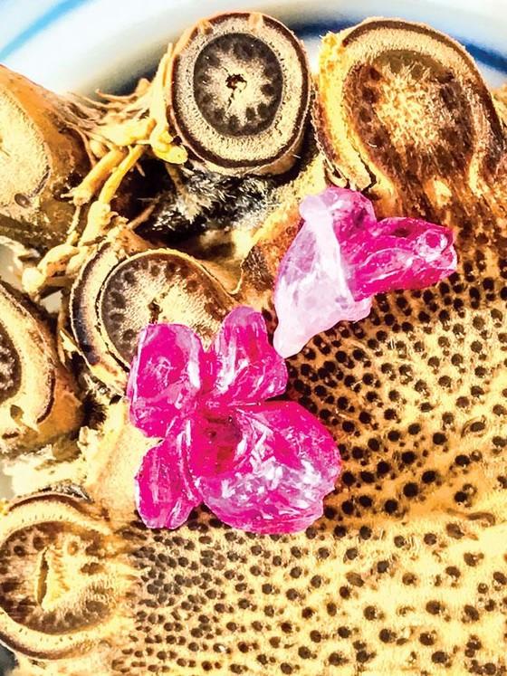 Minh Pasteur và bộ sưu tập siêu nhỏ trên đá quý  ảnh 3
