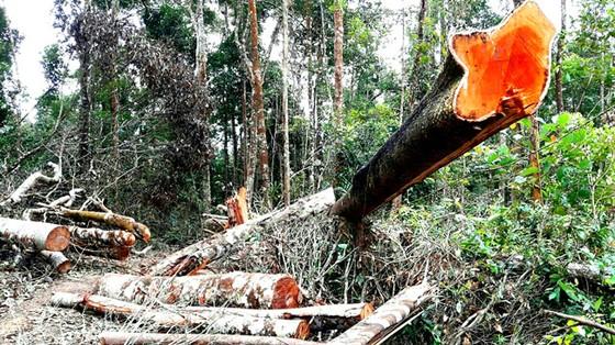Xà xẻo tiền dịch vụ môi trường rừng ảnh 1