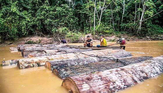 Con đường rửa gỗ lậu ảnh 1
