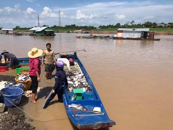 Đã tìm ra nguyên nhân 1.000 tấn cá chết trên sông La Ngà ảnh 1