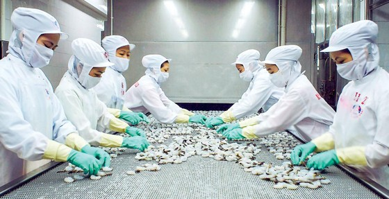 Seafood stocks impacted by negative information of MPC ảnh 1