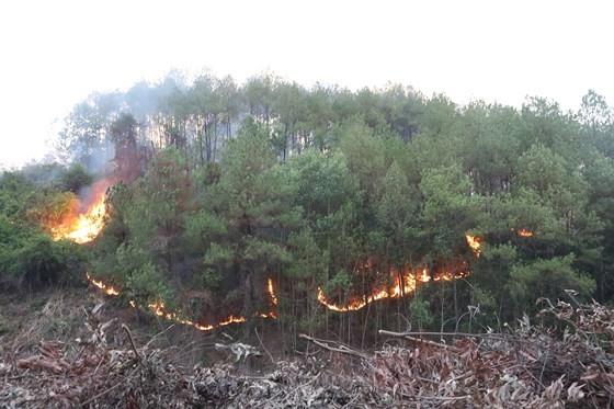Cây lương thực khô cháy, chết dần vì hạn hán kéo dài ở khu vực Trung Trung bộ ảnh 1