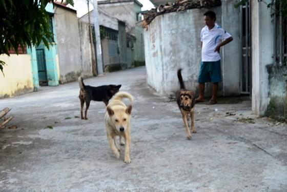 Chó cắn làm 46 người thiệt mạng ảnh 1