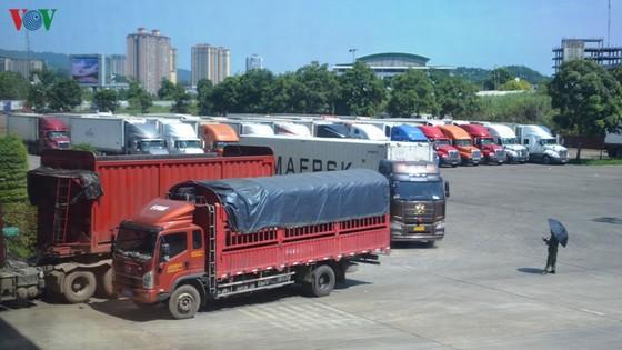 thuc hu hang tram container thanh long bi trung quoc cam cua? hinh 1