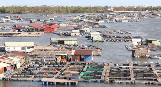 Phát triển bền vững nuôi trồng thủy sản ảnh 1