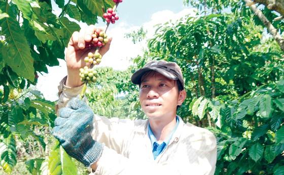 EVFTA có hiệu lực, nhiều cơ hội cho nông nghiệp ảnh 1