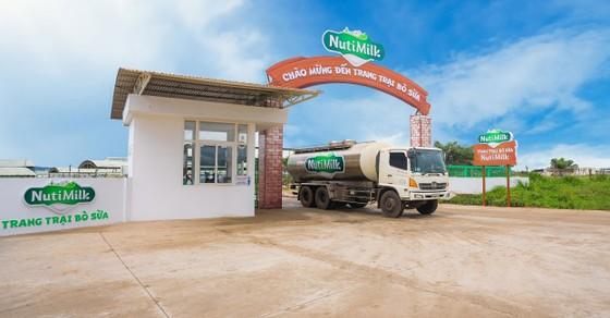 Nutifood ra mắt trang trại bò sữa Nutimilk ảnh 1